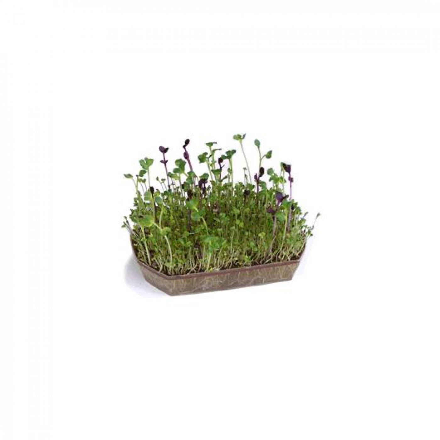 Pack germinador alfalfa