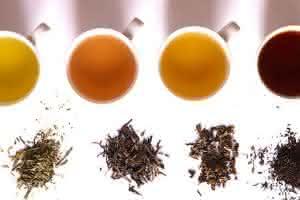Plantas medicinales para calmar las náuseas