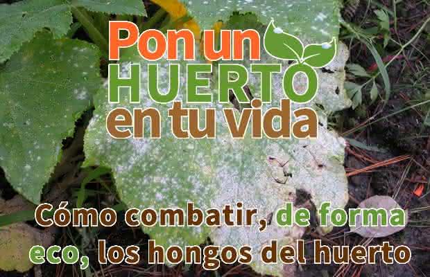 Cómo combatir los hongos del huerto de forma ecológica