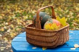 Le potager en octobre