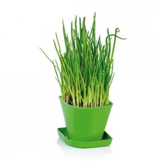 Juego para cultivar hierbas arom ticas sense cebollino por - Plantar plantas aromaticas ...