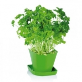 Juego para cultivar hierbas aromáticas Sense Perejil