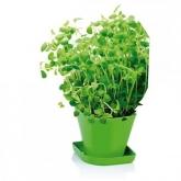 Juego para cultivar hierbas aromáticas Sense Orégano