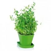 Juego para cultivar hierbas aromáticas Sense Tomillo