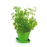 Juego para cultivar hierbas aromáticas Sense Cilantro