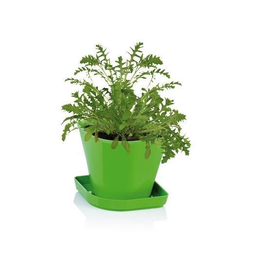 Juego para cultivar hierbas arom ticas sense r cula por 4 - Plantar plantas aromaticas ...
