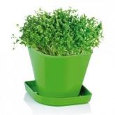 Juego para cultivar hierbas aromáticas Sense Berro