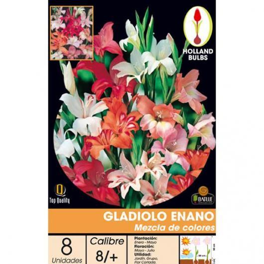 Bulbo Gladiolo Enano MEZCLA 8 ud.