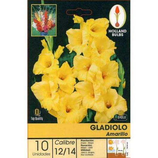 Bulbo di Gladiolo giallo 10 unità