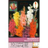 Bulbo di Gladiolo MEZCLA 10 unità