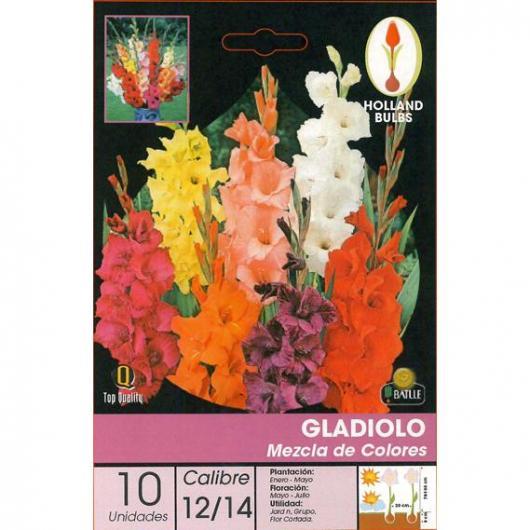 Bulbo Gladiolo Mezcla 10 ud.