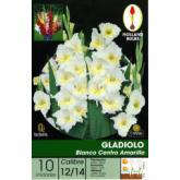 Bulbo di Gladiolo Bianco centro giallo 10 unità