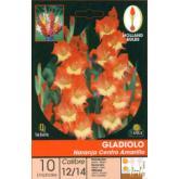 Bulbo di Gladiolo Arancia centro giallo 10 unità