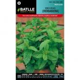 Sementes de Peppermint (Hortelã spicata)