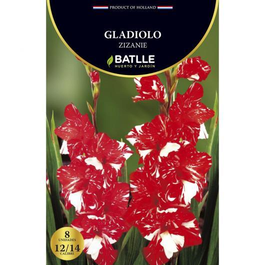 Bulbo Gladiolo Zizanie 8 ud