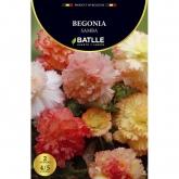 Bulbo di Begonia Samba 2 unità