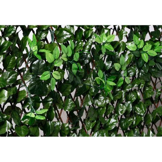 Celosía de mimbre con hojas y brotes