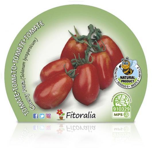 Plantón ecológico de Tomate Cherry Pera maceta 10,5 cm de diámetro