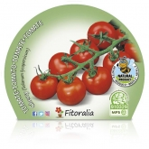 Plantel ecológico de Tomate Cherry Redondo - 10,5 centímetros de diâmetro