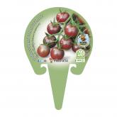 Eco Black Cherry Tomato pote de mudas 10,5 centímetros de diâmetro