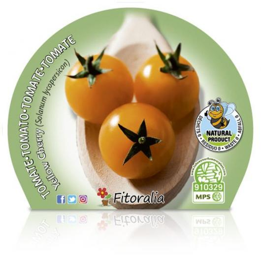 Plantón ecológico de  Tomate Yellow Cherry maceta 10,5 cm de diámetro