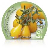 Pot mudas Ecológica Tomatinho Yellow Pear 10,5 centímetros de diâmetro