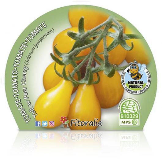 Plantón ecológico de Tomate Yellow Pear Cherry maceta 10,5 cm de diámetro