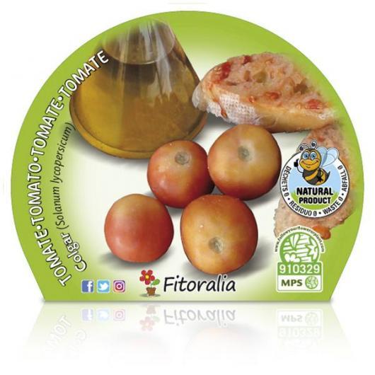 Plantón ecológico de Tomate Colgar maceta 10,5 cm de diámetro
