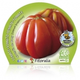 Plantón ecológico de Tomate Corazón de Buey maceta 10,5 cm de diámetro