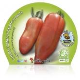 Plantón ecológico de  Tomate Corno maceta 10,5 cm de diámetro