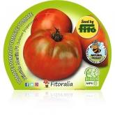 Eco Mudas híbrido Salada de Tomate Amadeo pot diâmetro 10,5 centímetros