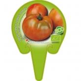 Eco Mudas híbrido Salada de Tomate Kathon pot diâmetro 10,5 centímetros