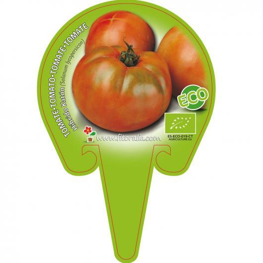 Plantón ecológico de Tomate Ensalada Híbrido Katón maceta 10,5 cm de diámetro