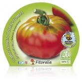 Organic mudas de tomate pote Esquenaverd 10,5 centímetros de diâmetro