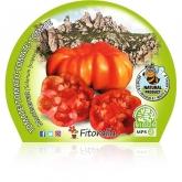 Organic mudas de tomate pote Montserrat 10,5 centímetros de diâmetro