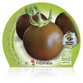 Preto de mudas de tomateiro ecológica pot diâmetro 10,5 centímetros