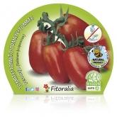 Pear tomate Mudas ecológica Mata Baja pot diâmetro 10,5 centímetros