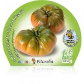 Plantel ecológico de Tomate Raf 10,5 cm de diâmetro