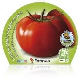 Tomate Mudas ecológica Tres Cantos pot diâmetro 10,5 centímetros