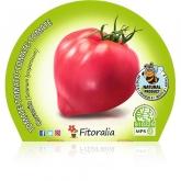Coração de mudas de tomateiro ecológica pot diâmetro 10,5 centímetros