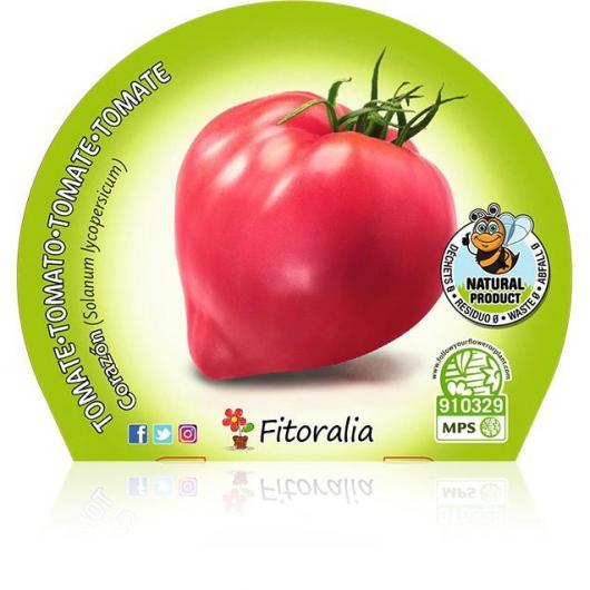 Plantón ecológico de  Tomate Corazón maceta 10,5 cm de diámetro
