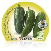 Ecological Gernika pimenta mudas de maconha 10,5 centímetros de diâmetro