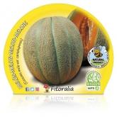 Ecological pot melão mudas Cantalup 10,5 centímetros de diâmetro