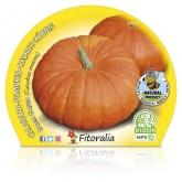 Bom Pumpkin ecológica mudas pote Gusto 10,5 centímetros de diâmetro