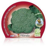Plantón ecológico de  Brócoli Verde maceta 10,5 cm de diámetro