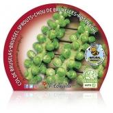 Bruxelas Col pote de mudas ecológica 10,5 centímetros de diâmetro