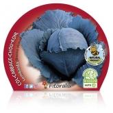 Col Lombarda pote de mudas ecológica 10,5 centímetros de diâmetro