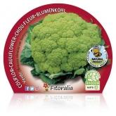Eco Green couve-flor pote de mudas 10,5 centímetros de diâmetro