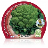 Romanesco Couve-flor pote de mudas ecológica 10,5 centímetros de diâmetro