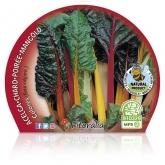 Chard pot mudas ecológicos Colors 10,5 centímetros de diâmetro